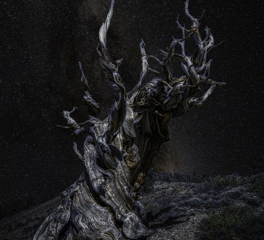 Methuselah - Ancient Bristlecone Pine Forest2